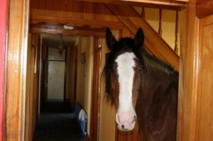 don't mind the horse, he doesn't eat muchjpg